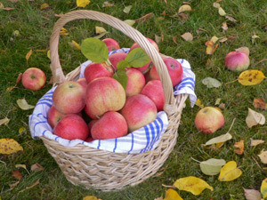 Top Places To Go Apple Picking Near Philadelphia « CBS Philly